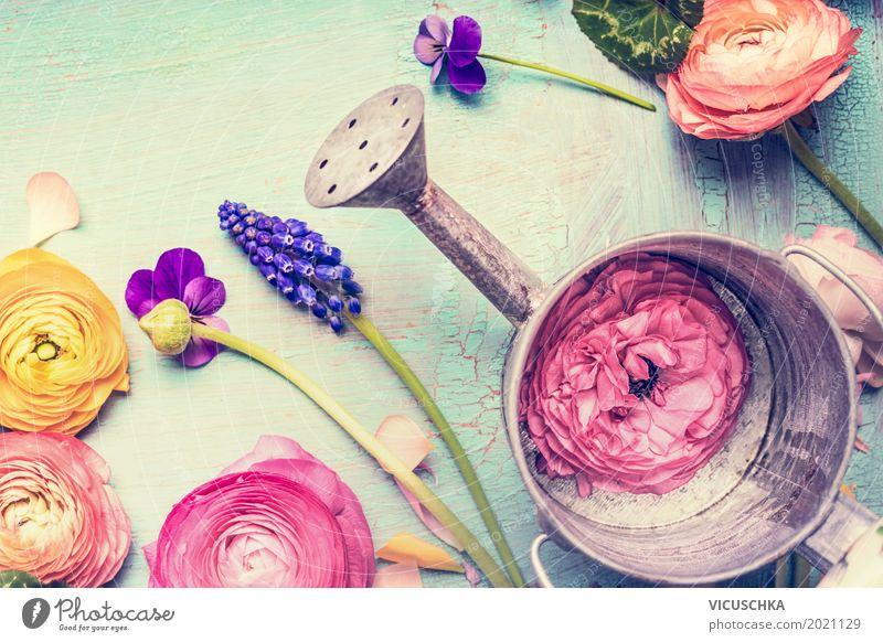 Gießkanne und Gartenblumen Lifestyle Stil Design Sommer Natur Pflanze Frühling Herbst Blume Blatt Blüte retro Duft schick Gerät altehrwürdig Gartenarbeit