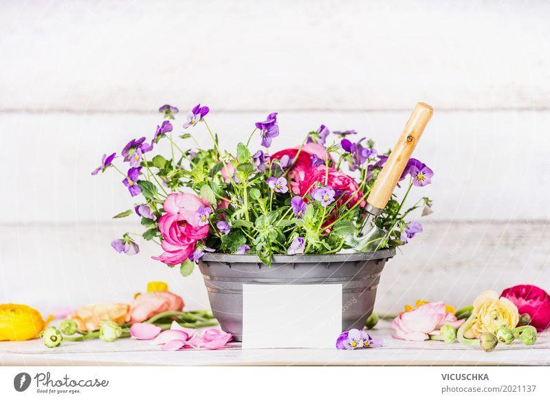 BlumenTopf mit Schaufel und Grußkarte Natur Pflanze Sommer weiß Blatt Wand Blüte Frühling Innenarchitektur Stil Mauer Garten Sand Design Freizeit & Hobby