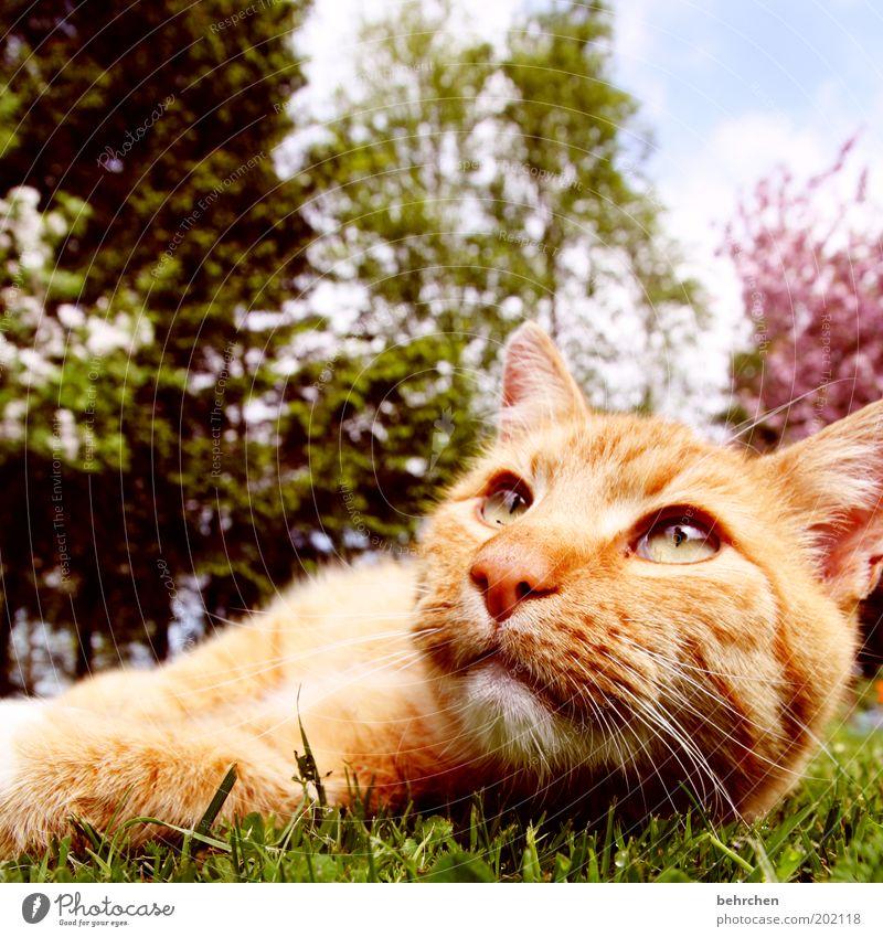 wat, is schon wieder montag? Natur Baum ruhig Auge Tier Erholung Gras Garten Katze Nase Rasen Sträucher Ohr weich Tiergesicht liegen