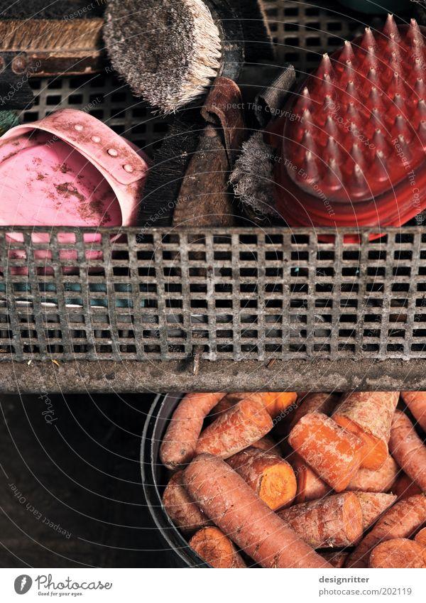 Wellness-Angebot Ferien & Urlaub & Reisen Freizeit & Hobby dreckig Pferd Sauberkeit Gemüse Bauernhof Wohlgefühl Bioprodukte Haustier Nutztier Futter Möhre Vegetarische Ernährung Tierliebe Stall
