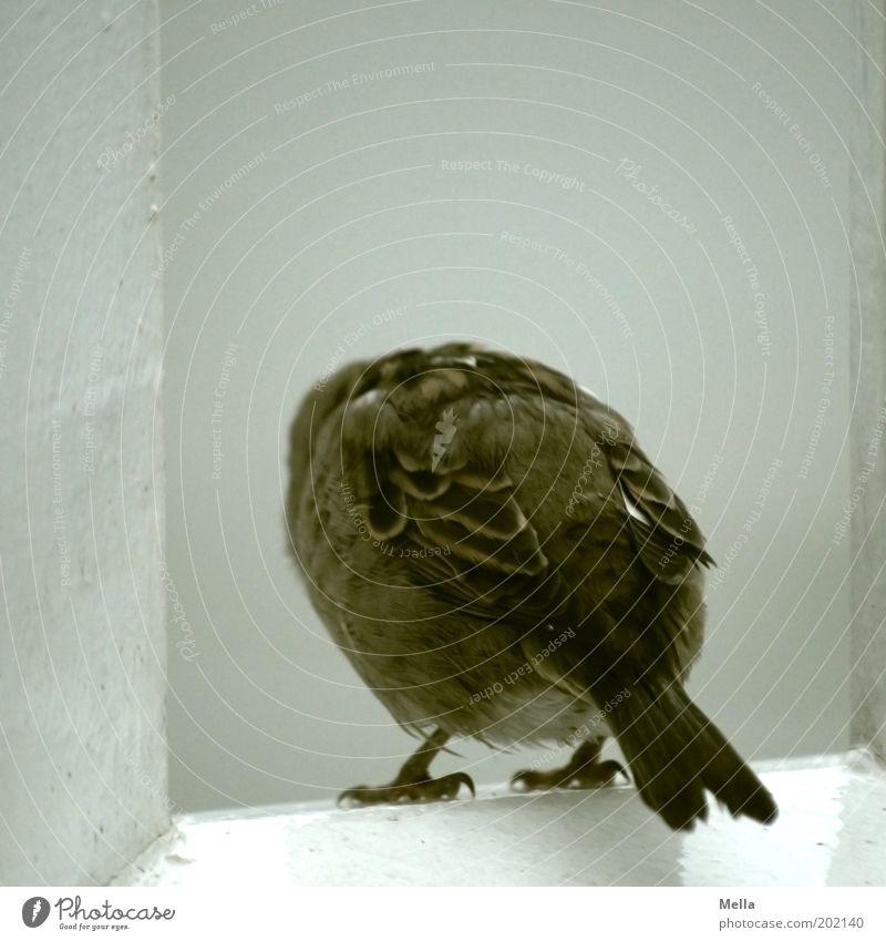 Tu's nicht! Natur Einsamkeit Tier grau braun Vogel sitzen Feder Flügel Wasserfahrzeug Sehnsucht Neugier niedlich Geländer Interesse einzeln