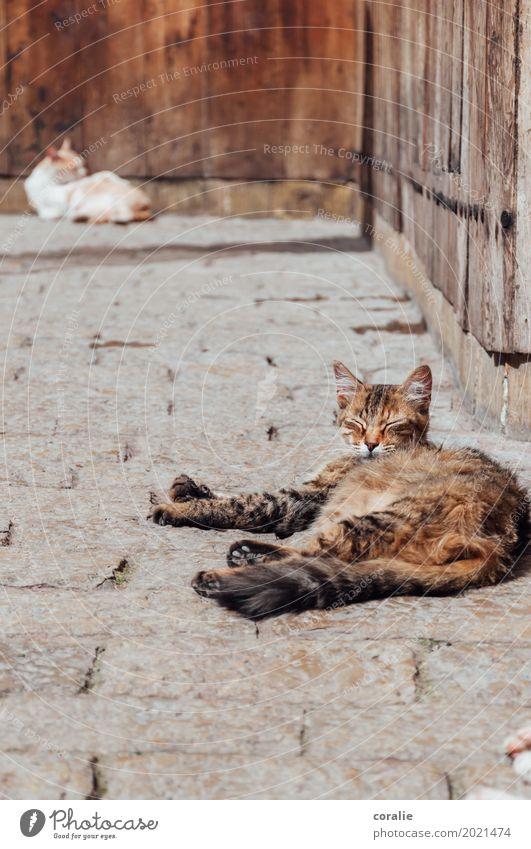 Siesta Katze genießen Mittagsschlaf Mittagspause Straßenkatze Pause Erholung Hauskatze Straßenbelag faulenzen bequem gemütlich ruhig Clique Pfote liegen