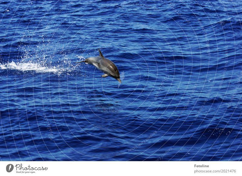in Freiheit Umwelt Natur Tier Urelemente Wasser Wellen Meer Wildtier 1 ästhetisch Ferne frei glänzend Glück kalt maritim nass natürlich dünn Geschwindigkeit