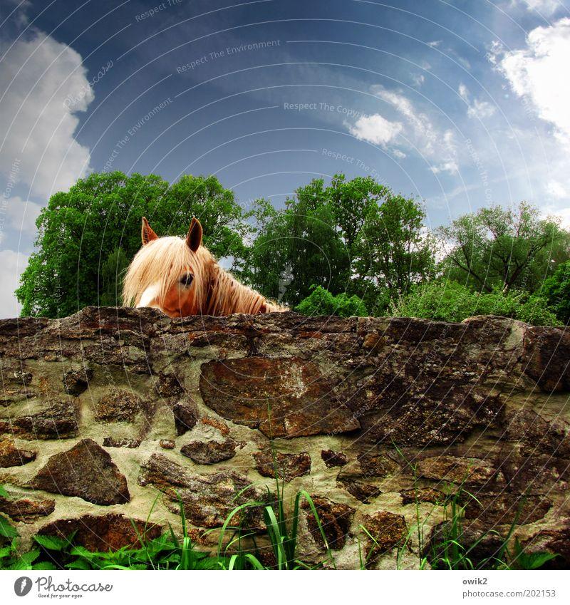 Gutn Tach Natur schön Himmel Baum grün Pflanze Wolken Tier Wand Gras Frühling Garten Stein Mauer Wärme