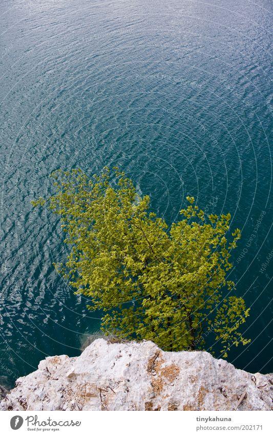 Cliffhanger Baum Meer grün blau Sommer Strand Ferien & Urlaub & Reisen ruhig Ferne Erholung Freiheit träumen Stein Landschaft Wellen Küste