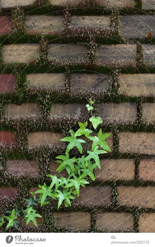grünzeug Natur alt grün Pflanze Wand Garten Stein Mauer Park Kraft dreckig Wachstum Wandel & Veränderung Sträucher Verfall Moos