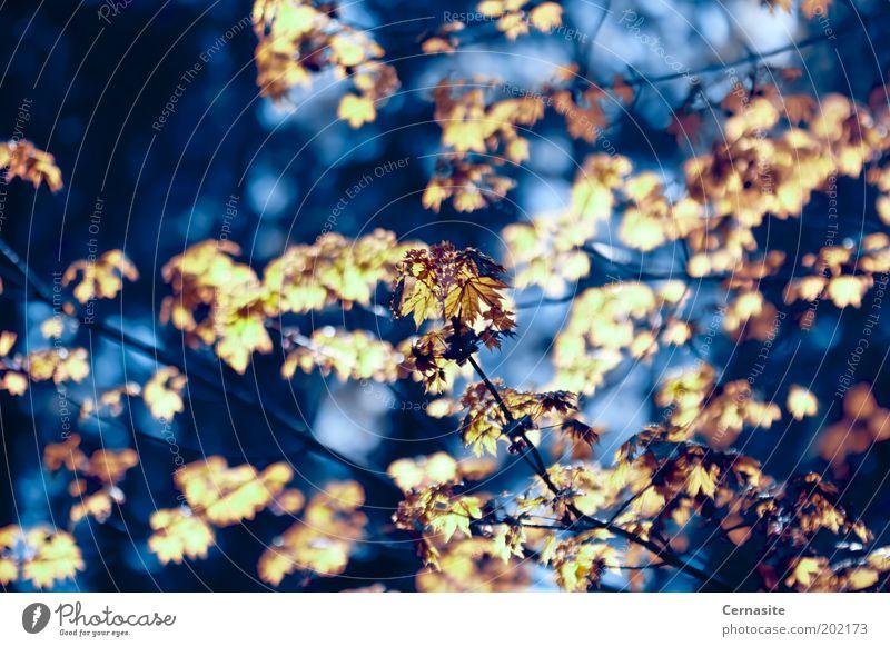 Erleuchtete Dunkelheit Umwelt Natur Landschaft Pflanze Sonnenlicht Frühling Schönes Wetter Baum Park Wiese Feld ästhetisch gruselig wild blau gelb gold Stimmung
