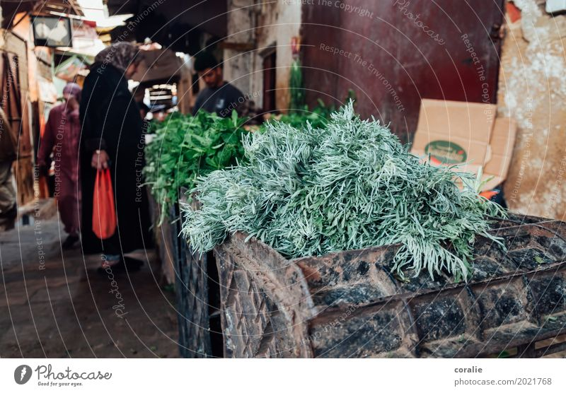 Souk Kräuter & Gewürze Dorf Fischerdorf Kleinstadt Altstadt Fußgängerzone Armut Markt Markttag Marokko Thymian Heilpflanzen Marktstand Orientalischer Bazar