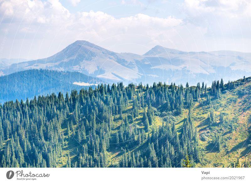 Grüne Kiefer in den Bergen schön Ferien & Urlaub & Reisen Tourismus Sommer Sommerurlaub Berge u. Gebirge Umwelt Natur Landschaft Pflanze Himmel Wolken