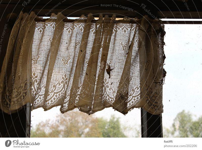 gardine des grauens^^ Himmel Baum Fenster dreckig trist Sehnsucht Verfall schäbig hängen Gardine Spitze Erinnerung vergessen Rest früher Stab