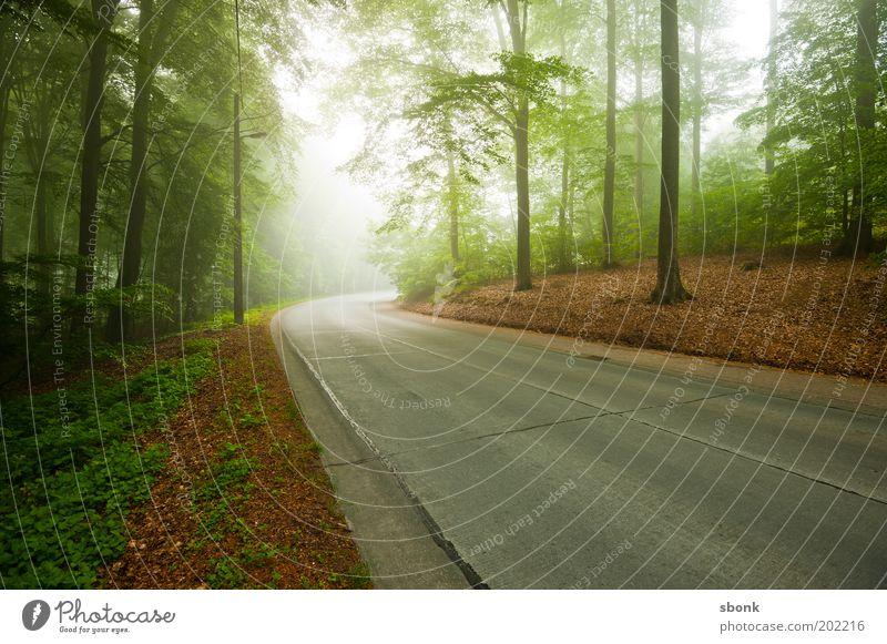 through morning szenes Umwelt Natur Landschaft Nebel Wald Verkehrswege Straße Wege & Pfade Stimmung Asphalt Landstraße Baum Farbfoto Außenaufnahme Menschenleer