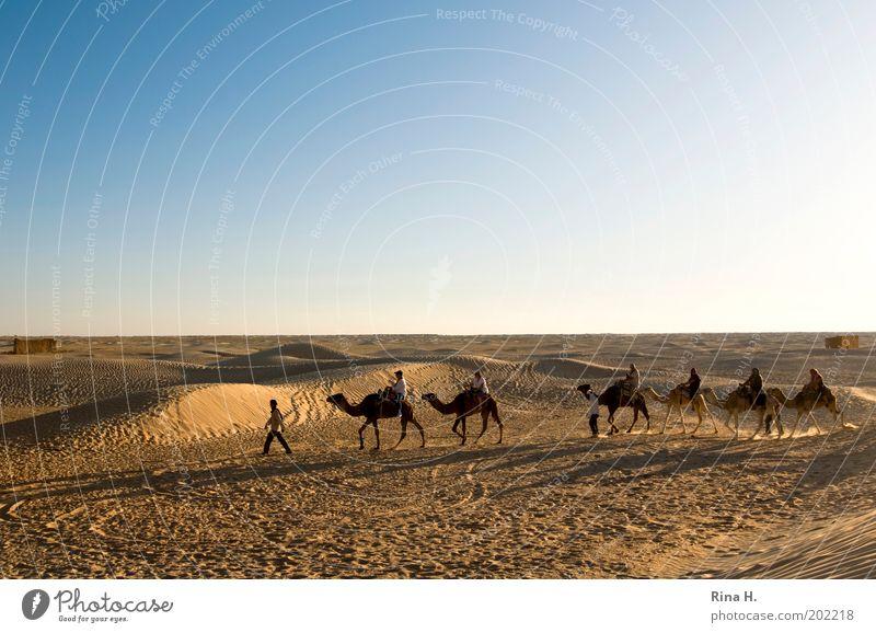 KaraWane Mensch Natur Ferien & Urlaub & Reisen Einsamkeit gelb Arbeit & Erwerbstätigkeit Bewegung Menschengruppe Sand Landschaft gold Horizont Ausflug Abenteuer