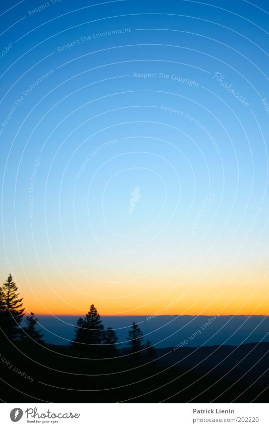 transition Natur entdecken Tanne Schwarzwald Baum blau Sonnenuntergang Streifen Orange schön träumen genießen Schatten Silhouette Wolken Himmel Übergang