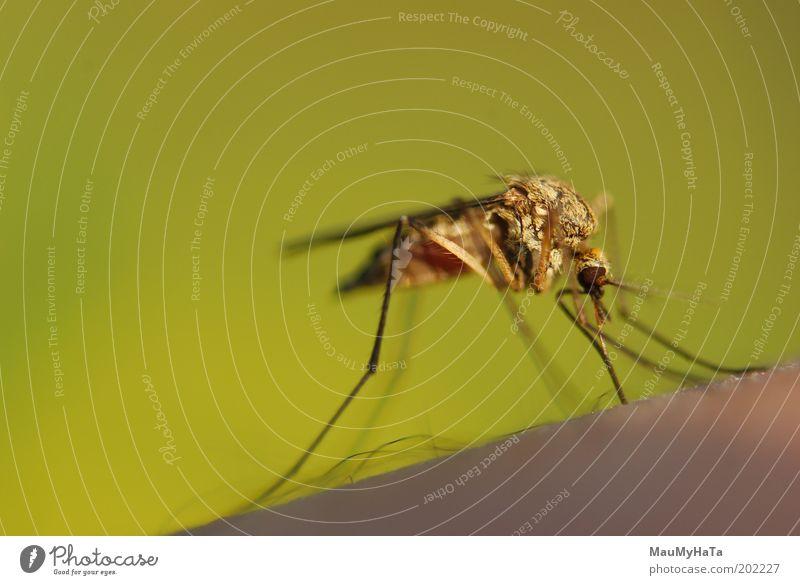 alt grün Tier Kraft Fliege Coolness Macht Küssen berühren Makroaufnahme Froschperspektive