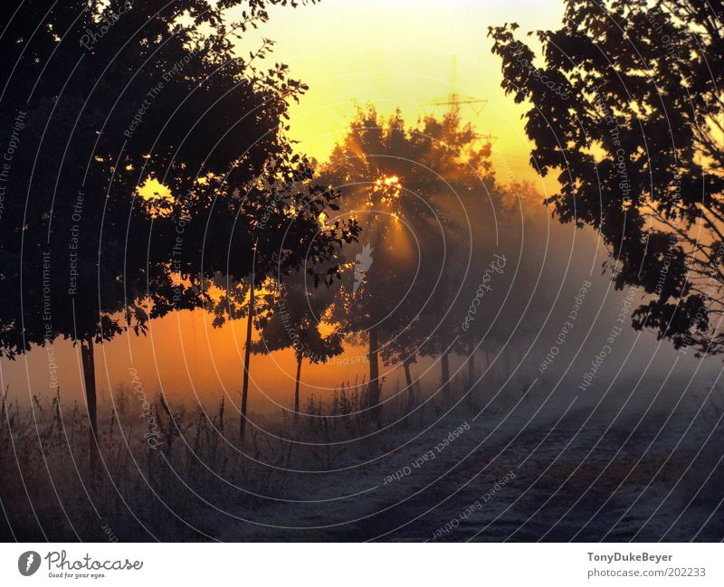 Herbstmorgen Umwelt Natur Landschaft Luft Wolkenloser Himmel Sonne Sonnenaufgang Sonnenuntergang Sonnenlicht Wetter Schönes Wetter Baum Gras Feld Menschenleer