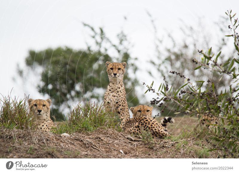 Auf der Mauer, auf der Lauer... Natur Ferien & Urlaub & Reisen Erholung Tier Ferne Umwelt Wiese Freiheit Tourismus Park Wildtier Sträucher Abenteuer Tiergruppe