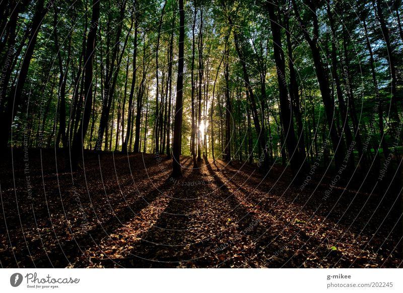 Sonnenuntergang im Wald Natur Baum Park Landschaft hell groß Erde ästhetisch Unendlichkeit natürlich gigantisch Sonnenlicht Weitwinkel