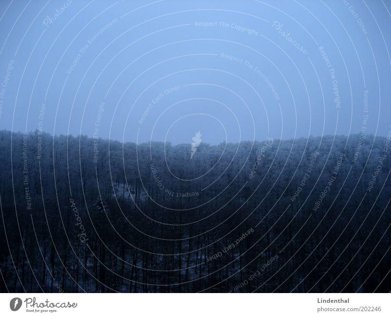 Alleine im Wald / Horizontal Natur Himmel blau Winter Einsamkeit dunkel Landschaft Angst