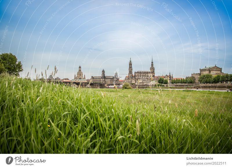 Dresden Elbwiese Tourismus Sightseeing Städtereise Architektur Kultur Natur Landschaft Pflanze Sommer Wiese Feld Flussufer Sachsen Stadt Hauptstadt Stadtrand