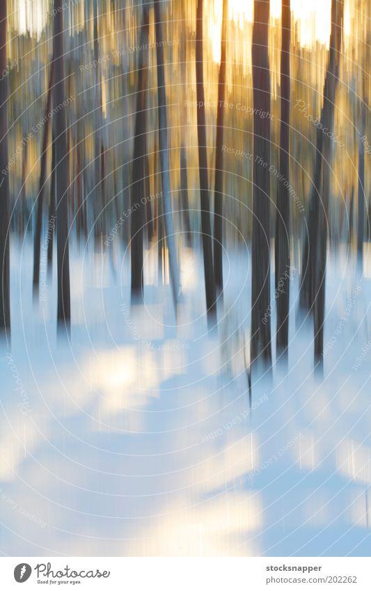 Baum Winter Wald Schnee Arktis