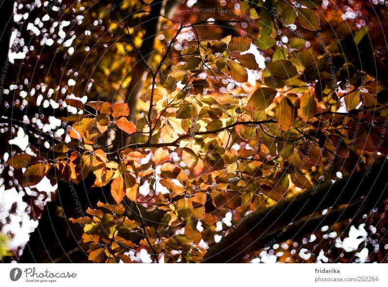 goldene aussicht Natur Landschaft Herbst Pflanze Baum Blatt Wald Erholung Wachstum Leben Umwelt Farbfoto Außenaufnahme Tag Lichterscheinung Sonnenlicht