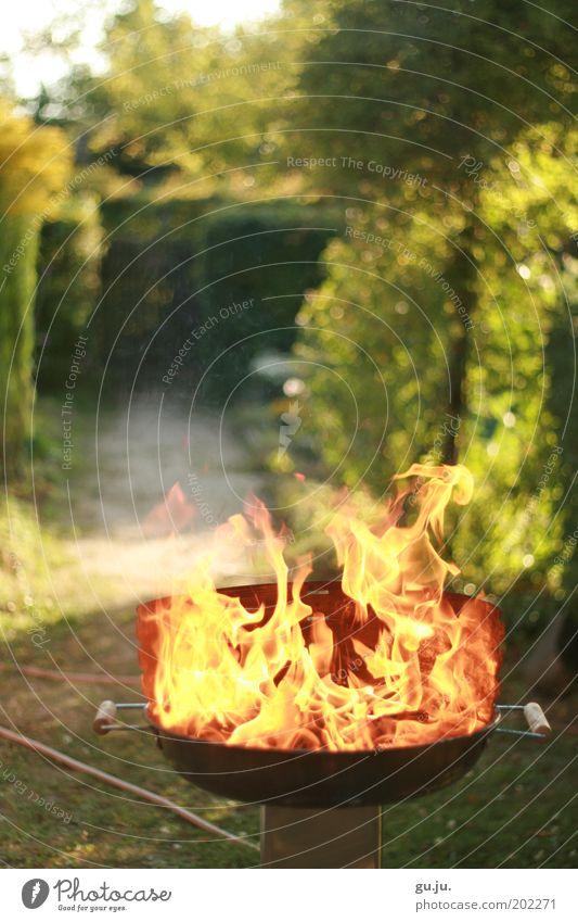 DER FLAMMENDE GRILL MK IV Natur grün Pflanze rot Sommer gelb Garten Wege & Pfade Wärme hell Feuer heiß Grillen brennen Schönes Wetter