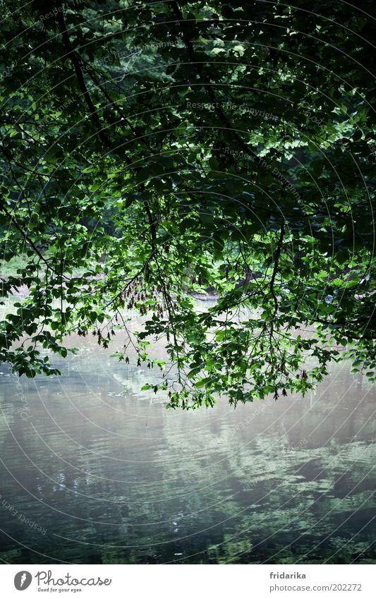 ein tag am teich Baum grün blau Pflanze Sommer Blatt kalt Erholung Frühling See Luft Wellen Wachstum Seeufer Urelemente hängen