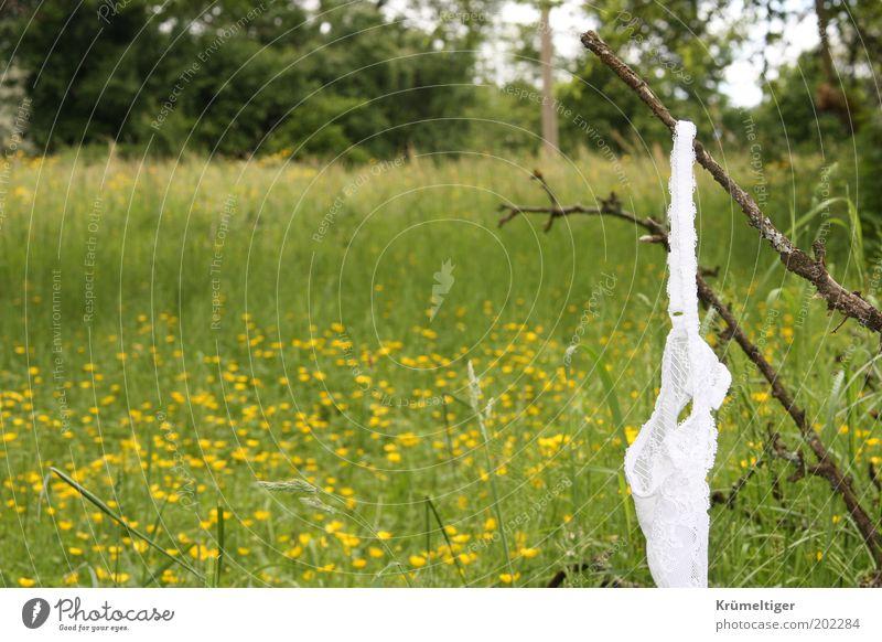 Liebesspiel Umwelt Natur Landschaft Pflanze Frühling Baum Blume Gras Garten Wiese Unterwäsche Stoff hängen gelb grün weiß Gefühle Frühlingsgefühle Vorfreude
