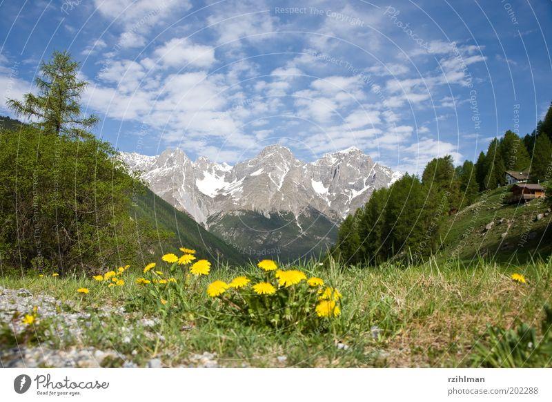 Ausblick bei S-Charl Baum Blume grün Haus Wald Wiese Blüte Gras Berge u. Gebirge Frühling Landschaft Feld Felsen Alpen Idylle Tanne