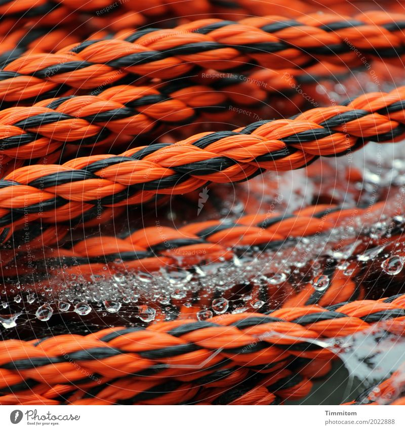 Tau Tau. Seil Kunststoff Wasser einfach orange schwarz Wassertropfen nass fest geflochten Spinngewebe Farbfoto Außenaufnahme Nahaufnahme Menschenleer Tag