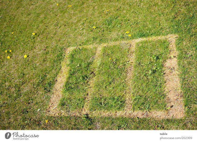 missing . . . Natur grün Wiese Garten braun Wachstum Freizeit & Hobby Blühend Spielfeld verlieren Rechteck eckig Sommerurlaub