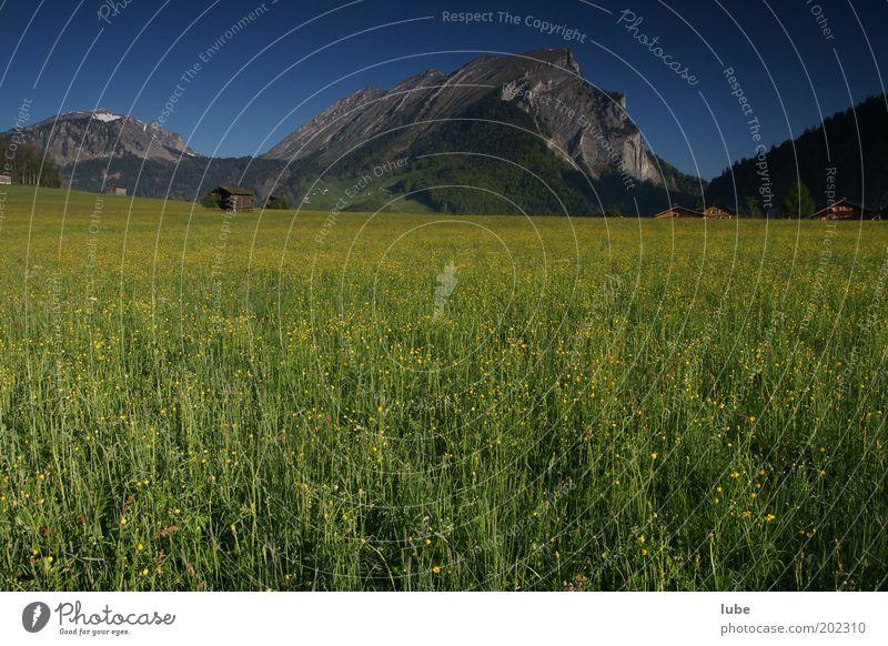 Frühlingswiese Umwelt Natur Landschaft Pflanze Tier Wolkenloser Himmel Klima Schönes Wetter Gras Wiese Feld Felsen Alpen Berge u. Gebirge Gipfel grün schön