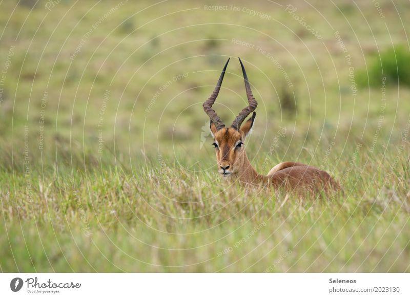 Päuschen Natur Ferien & Urlaub & Reisen Sommer Erholung Tier Ferne Umwelt Wiese Tourismus Ausflug Wildtier Abenteuer Fernweh Tiergesicht Expedition Horn