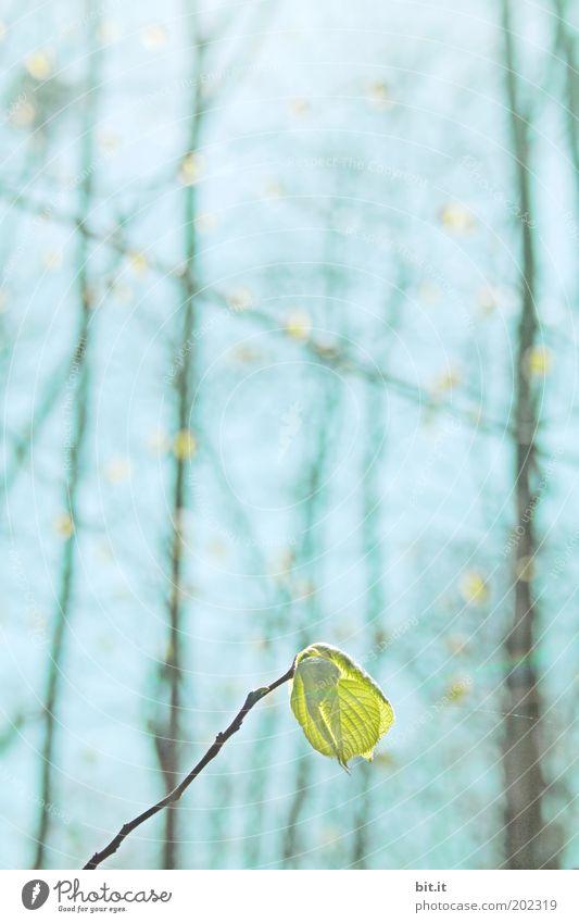 PHOTOSYNTHESE Natur Himmel Sonne grün blau Pflanze Blatt Frühling Kraft Wetter Umwelt frisch Wachstum Klima Ast Blühend