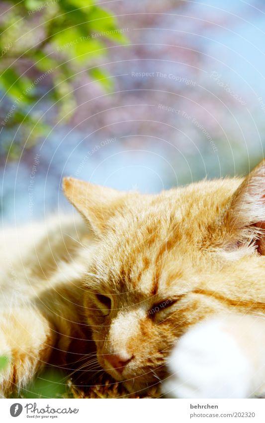 lovecats Himmel Schönes Wetter Baum Blume Tier Haustier Katze Tiergesicht 1 Vertrauen Schutz Geborgenheit Sympathie Tierliebe Hauskatze kuschlig Fell Auge Nase