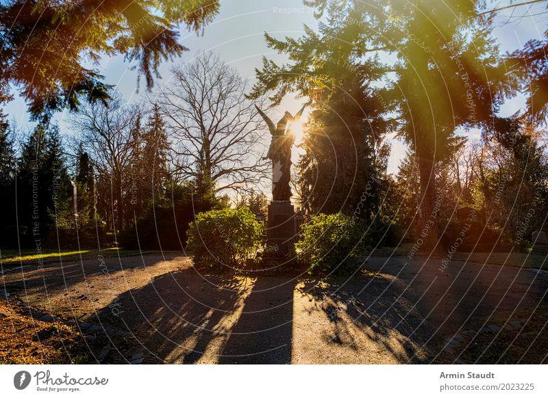 Engel im Gegenlicht Natur Landschaft Wolkenloser Himmel Sonne Sonnenaufgang Sonnenuntergang Frühling Pflanze Baum Park ästhetisch außergewöhnlich dunkel
