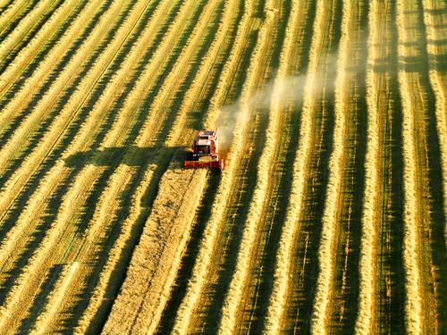 Spuren eines Mähdreschers bei der Ernte von oben Freiheit Landwirtschaft Forstwirtschaft Industrie Feld Arbeit & Erwerbstätigkeit fliegen gelb Stimmung Ausdauer