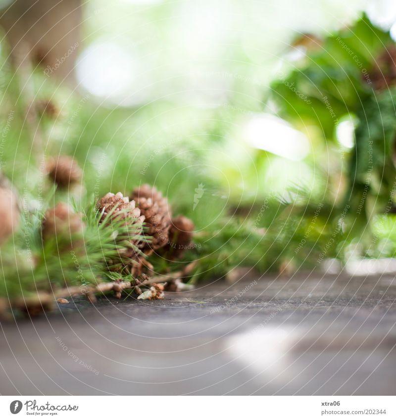 i love my new cam Natur schön grün authentisch Zweig Grünpflanze Umwelt Tannenzapfen Zapfen