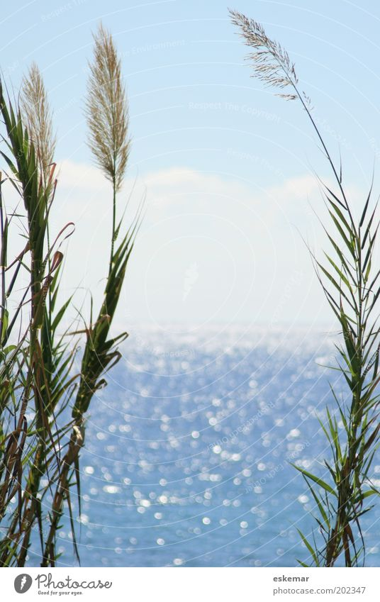 Meer Umwelt Natur Landschaft Urelemente Wasser Himmel Wolkenloser Himmel Horizont Sonnenlicht Sommer Schönes Wetter Wärme Pflanze Grünpflanze Küste Mittelmeer