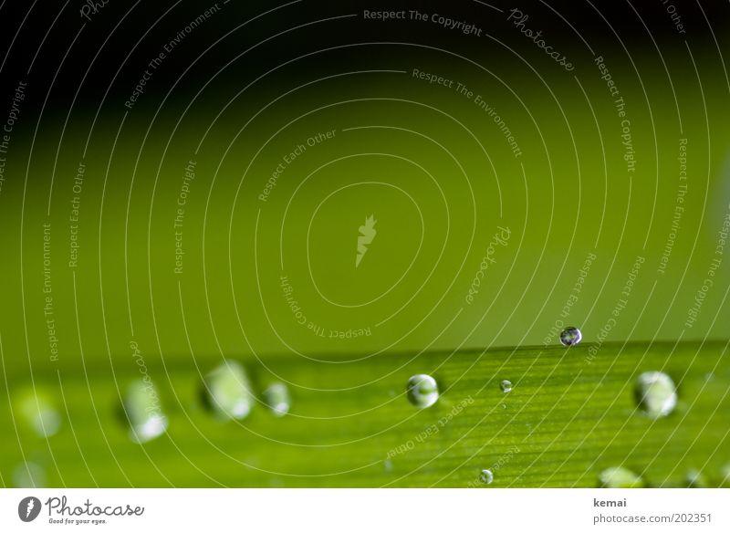 Mai 2010 Natur schön grün Pflanze Blatt Gras Frühling Regen glänzend Wassertropfen nass frisch ästhetisch Tropfen Klima Flüssigkeit