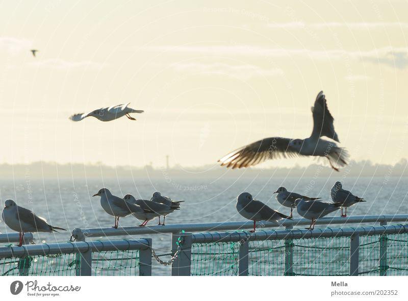 Meeting Point Wasser Himmel Meer Sommer Ferien & Urlaub & Reisen Tier Ferne Bewegung Landschaft Stimmung Zusammensein Vogel Küste Umwelt fliegen sitzen