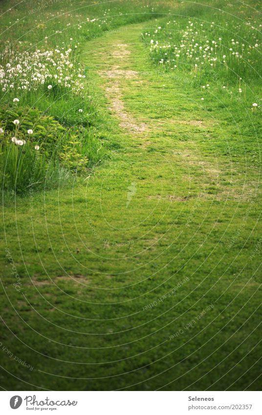 Nix wie Weg Natur Blume grün Sommer Ferien & Urlaub & Reisen ruhig Erholung Wiese Gras Freiheit Wege & Pfade Park Landschaft Feld Umwelt