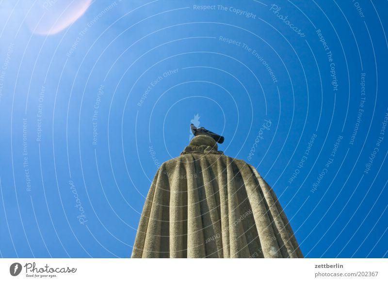 Taube aufm Denkmal Paris Frankreich Panthéon Statue Rücken Mantel Umhang Vogel sitzen Hinterkopf Himmel Sommer Schönes Wetter Wolkenloser Himmel blau