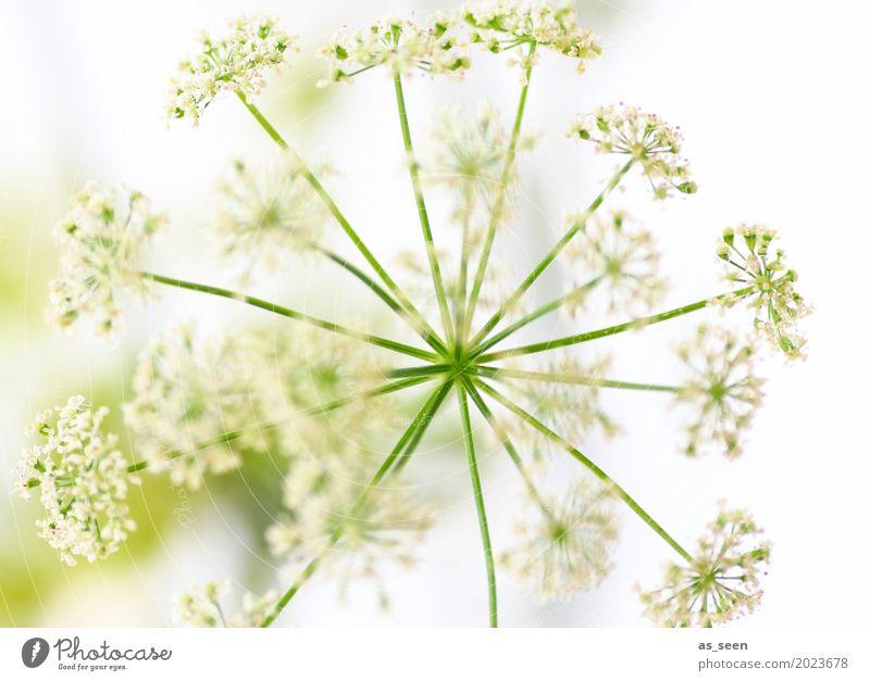 Blütenstern Lifestyle elegant Stil schön Wellness Leben harmonisch Muttertag Weihnachten & Advent Hochzeit Natur Frühling Sommer Pflanze Blume Sträucher