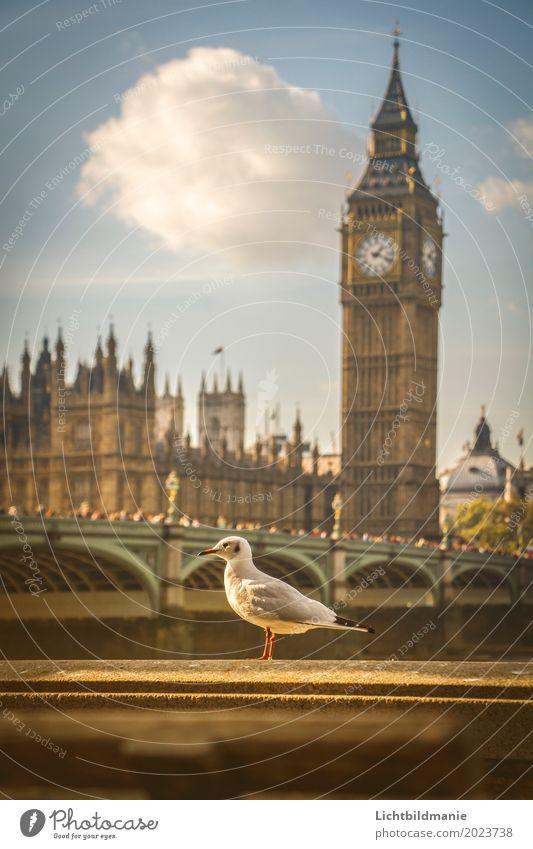 Stadtmöve in London Lifestyle Tourismus Sightseeing Städtereise Mensch Menschenmenge Himmel Flussufer Themse Themse Brücken Großbritannien Stadtzentrum
