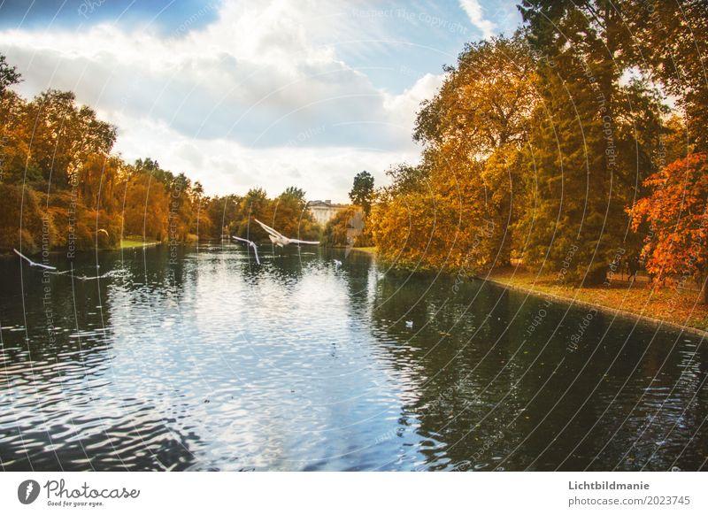 St.James Tourismus Ausflug Freiheit Sightseeing Städtereise Natur Pflanze Tier Herbst Baum Park Seeufer Teich London England Stadtzentrum Palast Platz