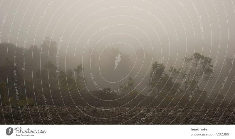 Bizarro World Ferien & Urlaub & Reisen Tourismus Ferne Umwelt Natur Landschaft Pflanze Erde Luft Wolken Klima Wetter Nebel Wärme Dürre Stimmung Fernweh Angst