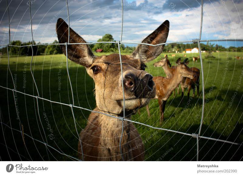 rehgional schön Tier Wiese Landschaft Freundschaft warten Nase Sicherheit Tiergruppe Ohr Freizeit & Hobby beobachten Vertrauen Sehnsucht Dorf Zoo