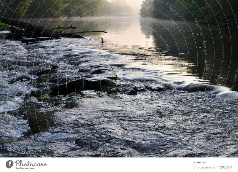 Morgenstimmung Natur Landschaft Wasser Sommer Nebel Baum Flussufer Sauberkeit wild ruhig Stromschnellen Saale Farbfoto Gedeckte Farben Außenaufnahme