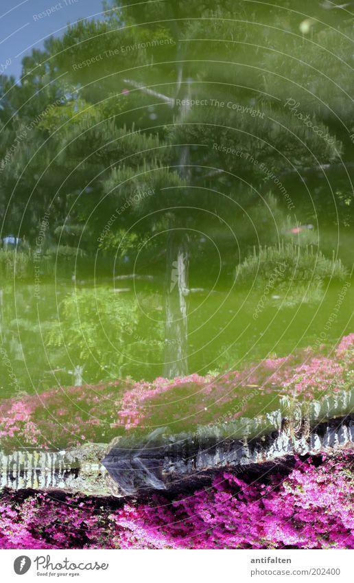 Japanischer Garten Umwelt Natur Landschaft Pflanze Wasser Himmel Frühling Sommer Schönes Wetter Wärme Baum Blume Park Wiese Teich Düsseldorf Stadtrand